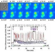批发|Fura 2-AM钙离子荧光探针