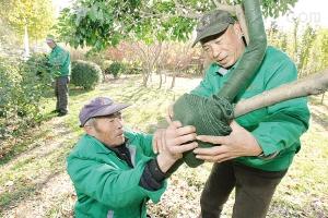 树木保温带,树木保温保湿带,树木养护带厂家