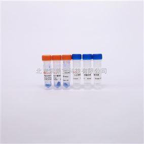 蛋白Marker试剂 Western Blot Marker