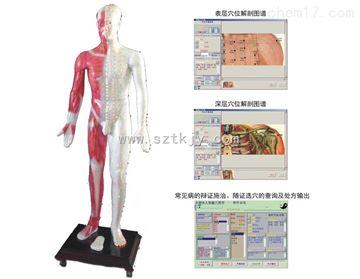 TKMX/ZJ-MAW170E光電感應多媒體人體針灸穴位發光模型