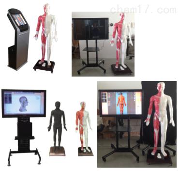 多媒体人体针灸穴位交互数字平台