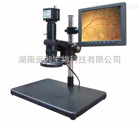 动物手术显微镜 动物显微镜 动物解剖显微镜