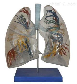 透明肺段      人体各大器官