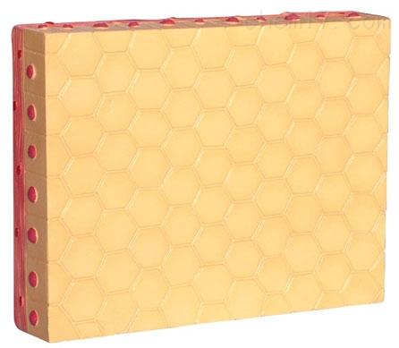 单层立方上皮组织 生物模型