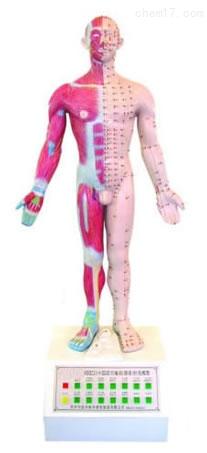 语音提示十四经穴针灸电动模型