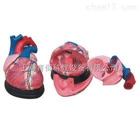 心脏解剖放大模型|脉管感觉系统模型