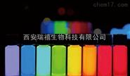 量子点作为生物荧光标记物 用于蛋白质及DNA的检测