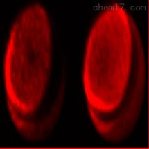 DiR碘化物 细胞膜探针