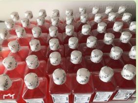 1640液体培养基  传秋