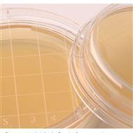 制药厂微生物检验用培养基  计数平板