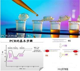50T荧光定量PCR检测试剂盒