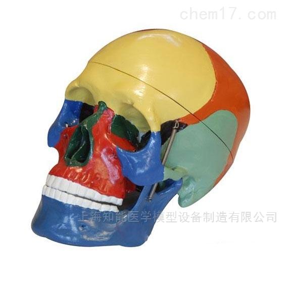 头颅骨着色分离模型(三部件)