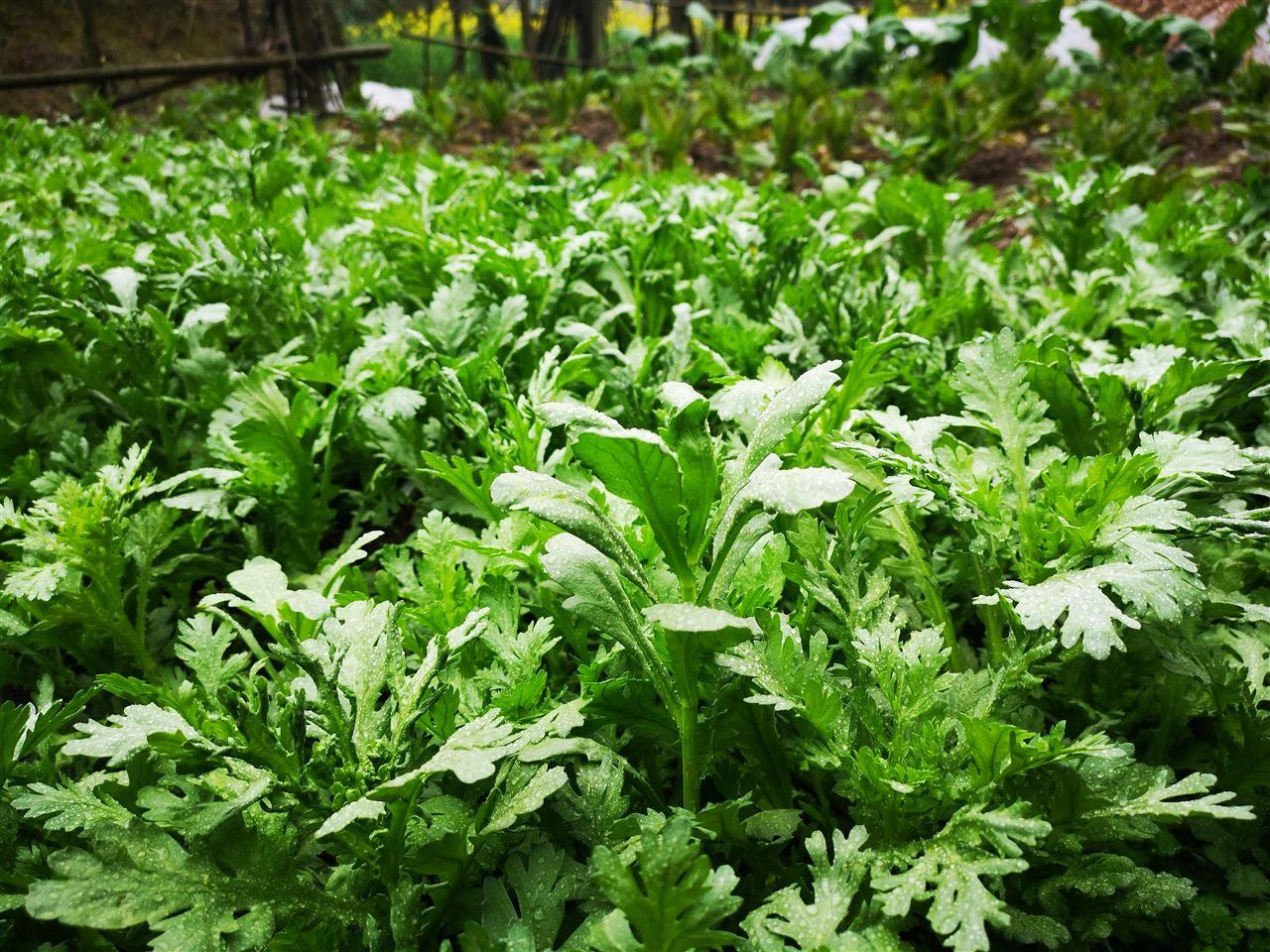 贵州开展植物萃取研究 农产品深加工带来仪器市场