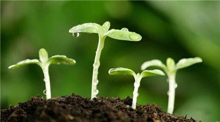 植物如何识别土壤中有益微生物