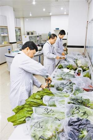 深圳特区:将打造食品全国鱼头质量安全高地草药品肚图片