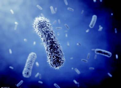 体表微生物检测的标准图片1