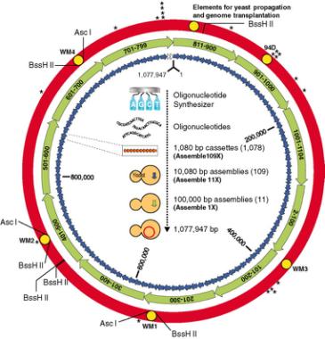 分子克隆方法总括-孟文举-hb170807