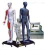 多媒体人体针灸穴位模型