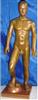 中医人体针灸模型|运动式古铜色人体针灸模型(85CM)