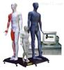 中医针灸教学模型|光电感应键控人体针灸穴位发光模型