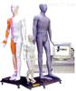 MAW-170E光电感应多媒体人体针灸穴位发光模型