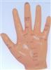 13CM销售手针灸模型