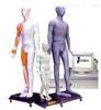 MAW-170E销售人体针灸穴位发光模型