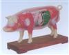 销售猪体针灸模型