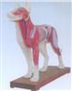 销售狗体针灸模型
