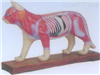 销售猫体针灸模型