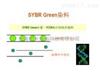 RT-PCR技术服务