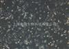 SMMC-7721/Sorafenib人肝癌索拉非尼耐药株