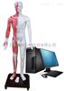 ZKMAW-170E光电感应多媒体人体针灸穴位发光模型