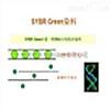 RT-PCR技術服務